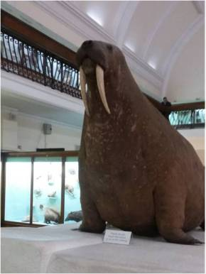 London: Asteroids & a Walrus